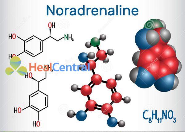 Cấu trúc Noradrenaline