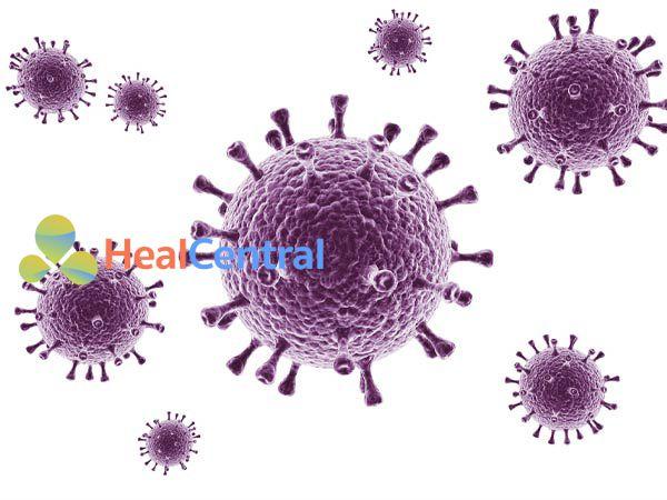 Hệ thống miễn dịch có thể tiêu diệt được một số loại virus