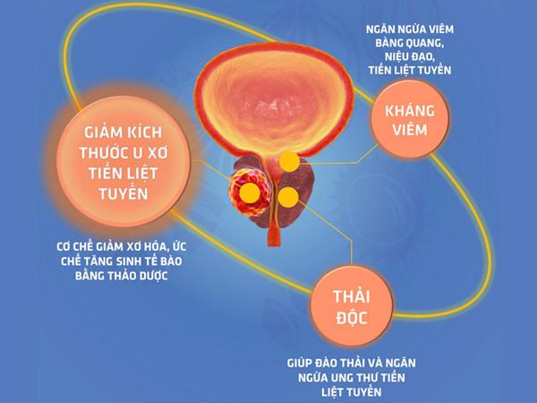 Cơ chế tác dụng của Urina Pros