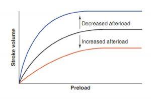 Hình 10.4 Đường cong Frank-Starling thể hiện hiệu quả của việc thay đổi hậu tải. Tăng hậu tải đó làm dịch chuyển đường cong xuống và sang phải. Giảm hậu tải dịch chuyển đường cong lên và sang trái.
