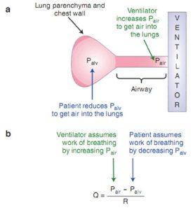 Hình 8.1 Sơ đồ (a) và phương trình (b) của hệ hô hấp. Bệnh nhân đảm nhận công thở trong khi hít vào bằng cách co thắt các cơ hô hấp, làm giảm áp lực màng phổi và phế nang. Máy thở đảm nhận công thở trong khi hít vào bằng cách tăng áp lực đường thở gần.
