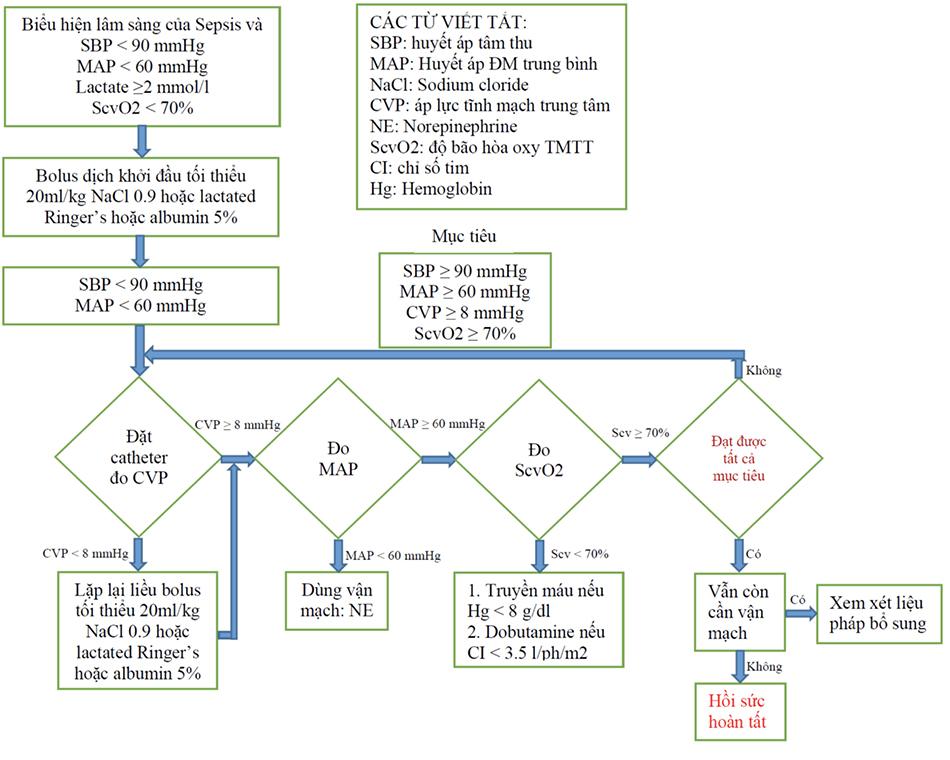 Quản lý Dịch truyền trong Sốc nhiễm trùng