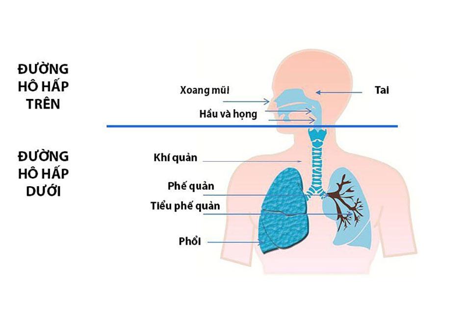 đường hô hấp