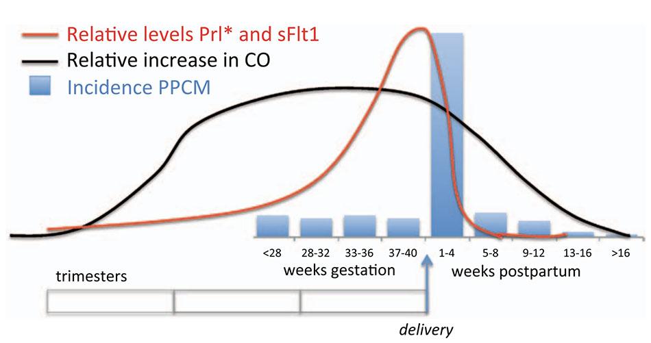 So sánh thời điểm thay đổi huyết động trong và sau khi mang thai