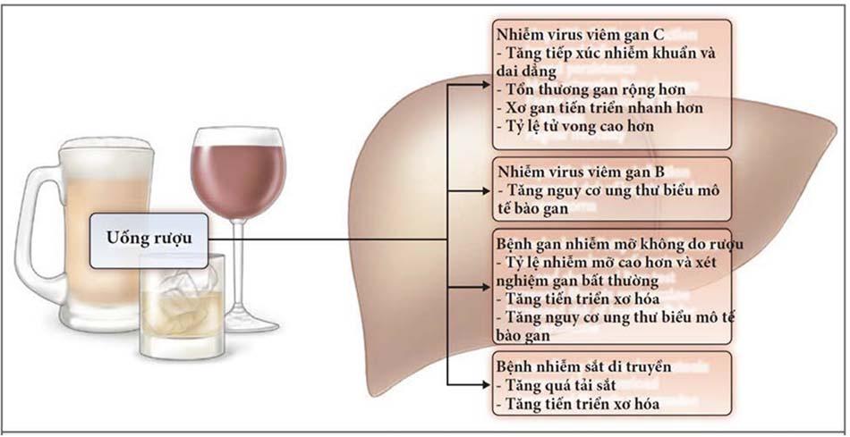 Ảnh hưởng của sử dụng rượu lên các dạng khác nhau của bệnh gan mạn