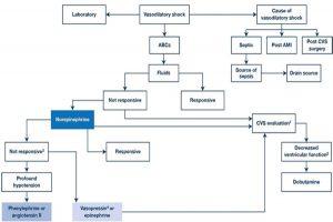 Hình 3. Lượt đồ để quản lý thuốc vận mạch.