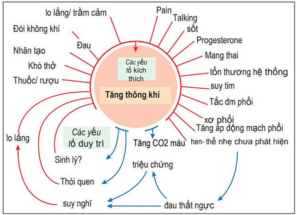 Các yếu tố làm tăng thông khí phổi