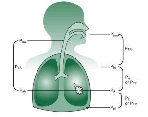 Hình 1.1 Áp lực khác nhau và độ chênh lệch áp lực của hệ hô hấp. Từ Kacmarek RM, Stoller JK, Heuer AJ, eds. Egan's Fundamentals of Respiratory Care. 11th ed. St. Louis, MO: Elsevier; 2017.