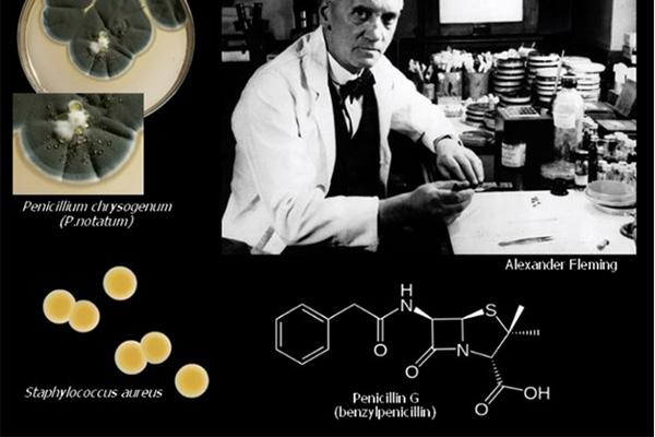 Alexander Fleming và phát minh tìm ra Penicillin đầu tiên (Penicillin G, hay Benzylpenicillin) từ Penicillium notatum