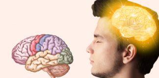 Cấu trúc bộ não con người
