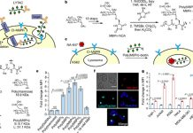 LYsosome-TArgeting Chimeras (LYTACs)