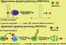 RIBOTACs: Công nghệ giúp phân huỷ RNA