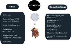 Hình 1. COVID-19 và hệ thống tim mạch.