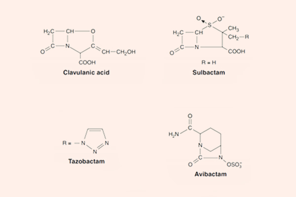 Cấu trúc một số chất ức chế β-lactamase