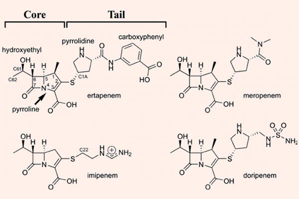 Cấu trúc hóa học của các Carbapenem