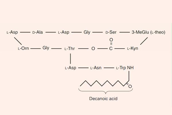 Cấu trúc hóa học của Daptomycin