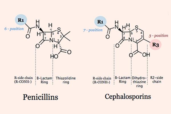 So sánh cấu trúc hóa học giữa Penicillin và Cephalosporin
