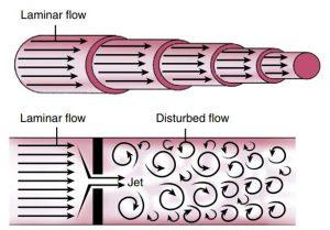 Hình 2-25 Mô hình dòng máu trong tim.