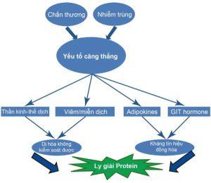 Hình 1.1 Các yếu tố kích hoạt như chấn thương, nhiễm trùng, suy hô hấp và bỏng kích hoạt đáp ứng của chuyển hóa với căng thẳng mà đỉnh điểm là tình trạng dị hóa không được kiểm soát và kháng lại các tín hiệu đồng hóa, dẫn đến ly giải protein