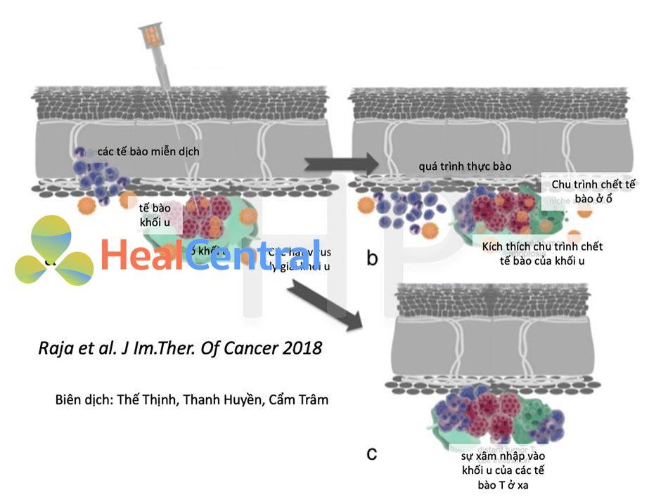 Quá trình ly giải khối u bằng virus