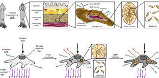 Tổng quan về ý tưởng tạo tế bào người trong suốt
