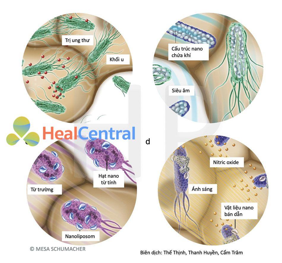 Các phương pháp ứng dụng vi khuẩn để chuẩn đoán và điều trị ung thư