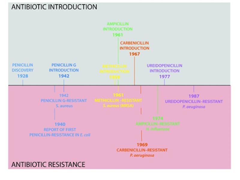 Ảnh. Trục thời gian nằm ngang hiển thị năm khám phá ra các loại Penicillin khác nhau (bên trên trục) cùng năm xuất hiện các chủng vi khuẩn đề kháng kháng sinh (bên dưới trục).