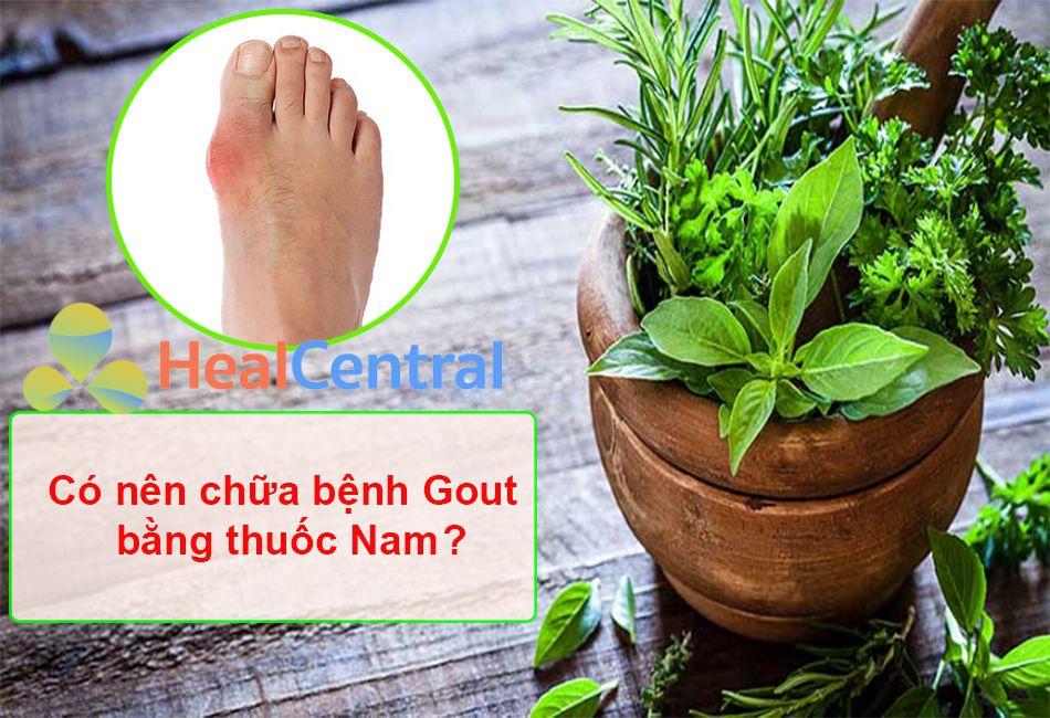 Có nên chữa bệnh Gout bằng thuốc Nam hay không?