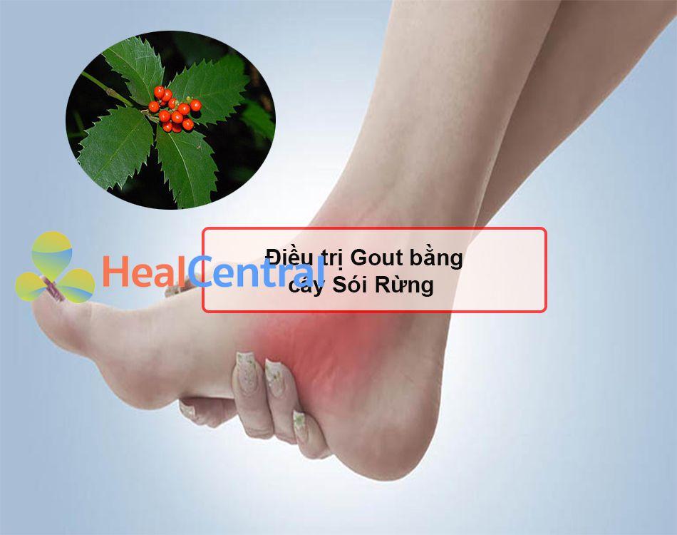 Điều trị Gout bằng cây Sói Rừng
