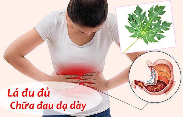 Lá đu đủ chữa bệnh đau dạ dày