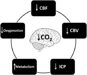 Hình 3 Các tác dụng trên não của hypocapnia.