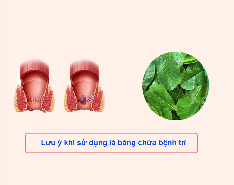 Lưu ý khi sử dụng lá bàng chữa bệnh trĩ