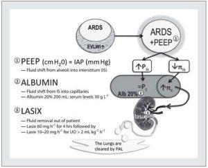 Hình 11. Lý luận cơ bản và cơ chế của điều trị PAL.