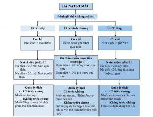 HÌNH 2 Lưu đồ dòng về cách tiếp cận hạ natri máu dựa trên thể tích ngoại bào (ECV).