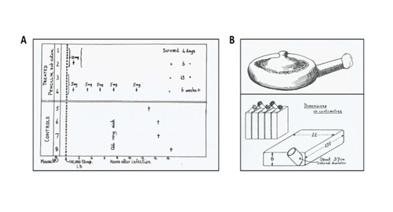 Ảnh. (A) Thử nghiệm in vivo về Penicillin đầu tiên trên chuột của các nhà khoa học tại đại học Oxford năm 1940. (B) Các thiết bị đơn giản được sử dụng để nuôi cấy nấm và lên men thu lấy Penicillin. Thiết bị phía bên dưới là loại được cải tiến bởi Florey và các cộng sự (so với thiết bị bên trên).