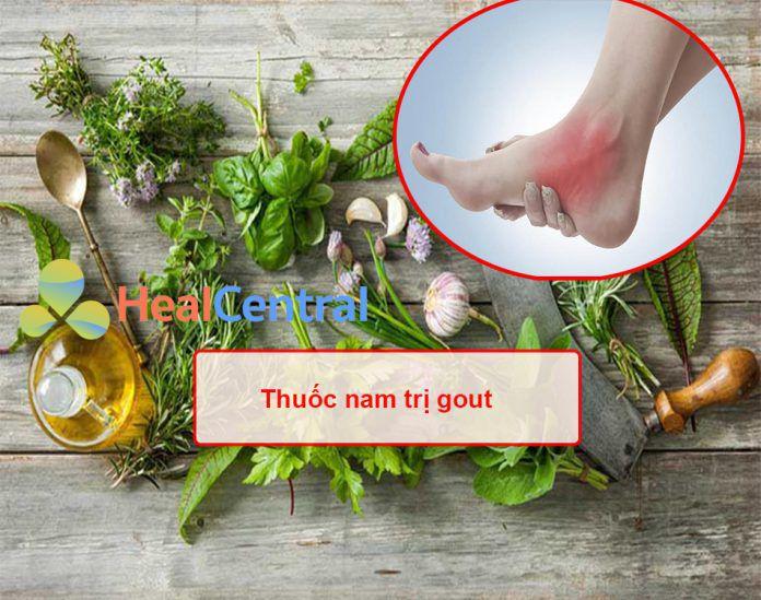 Thuốc nam trị gout