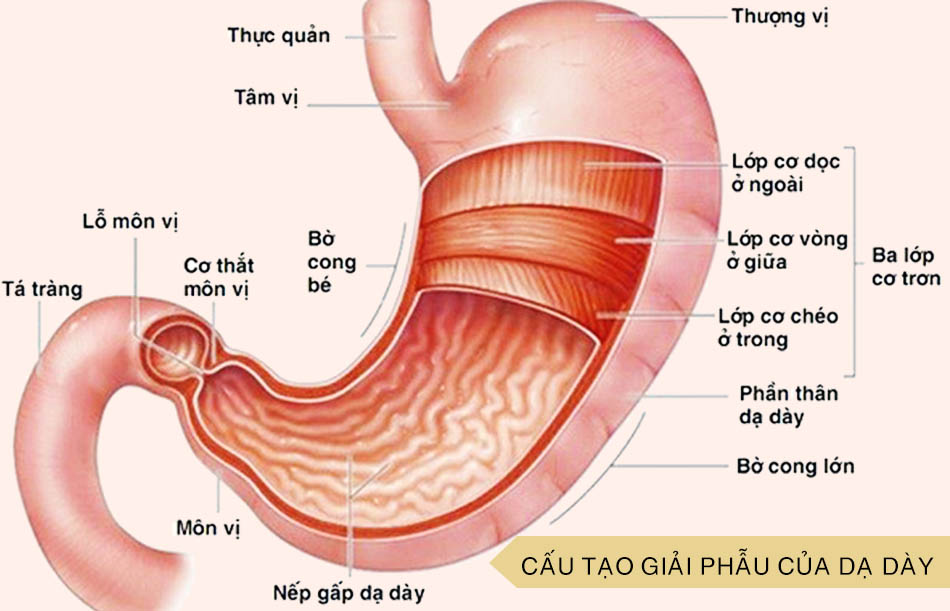Đau dạ dày là bệnh gì?
