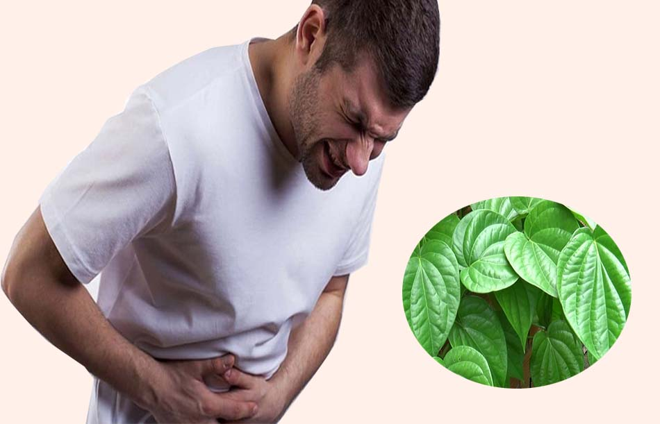 Công dụng của lá trầu không trong chữa trị các bệnh dạ dày