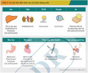 Hình 5. Các độc tính điển hình của các thuốc kháng nấm
