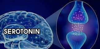Hormone Serotonin