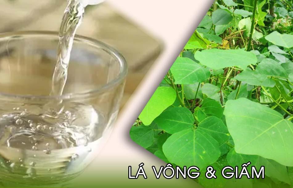 Bài thuốc từ lá vông và giấm cải thiện bệnh trĩ