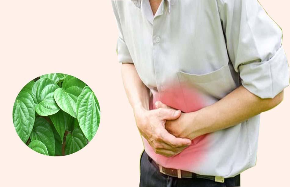 Lưu ý khi dùng lá trầu không chữa bệnh dạ dày