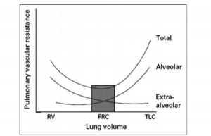 """Hình 3. Sự liên quan giữa thể tích phổi và kháng lực mạch máu phổi (PVR). Khi thể tích phổi tăng từ thể tích cặn (RV) lên tổng dung tích phổi (TLC), các mạch máu phế nang ngày càng trở nên bị nén bởi phế nang, và kháng lực của chúng tăng lên, trong khi kháng lực của các mạch máu ngoài phế nang giảm (ít trở nên quanh co hơn khi thể tích phổi tăng). Tác dụng kết hợp của việc tăng thể tích phổi lên mạch máu phổi tạo ra đường cong """"hình chữ U"""" điển hình như được hiển thị, với mức tối thiểu, hoặc tối ưu, ở khoảng dung tích cặn chức năng (FRC). Chuyển thể từ Shekerdemian L, Bohn D. Tác dụng tim mạch của thông khí cơ học. Arch Dis Child. 1999, 80 (5): 475-480,59"""