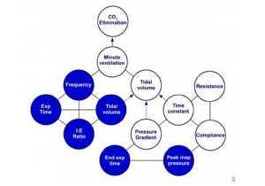 Hình 1. Mối quan hệ giữa các biến điều khiển máy thở (vòng tròn xanh) và cơ học phổi (vòng tròn trắng) xác định thông khí phút trong chế độ thông khí chu kỳ thời gian, giới hạn áp lực.