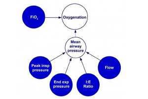 Hình 2. Các yếu tố quyết định oxy hóa trong quá trình thông khí chu kỳ thời gian giới hạn áp lực.