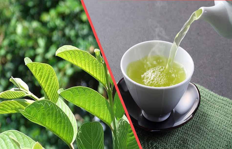 Sử dụng trà từ lá ổi