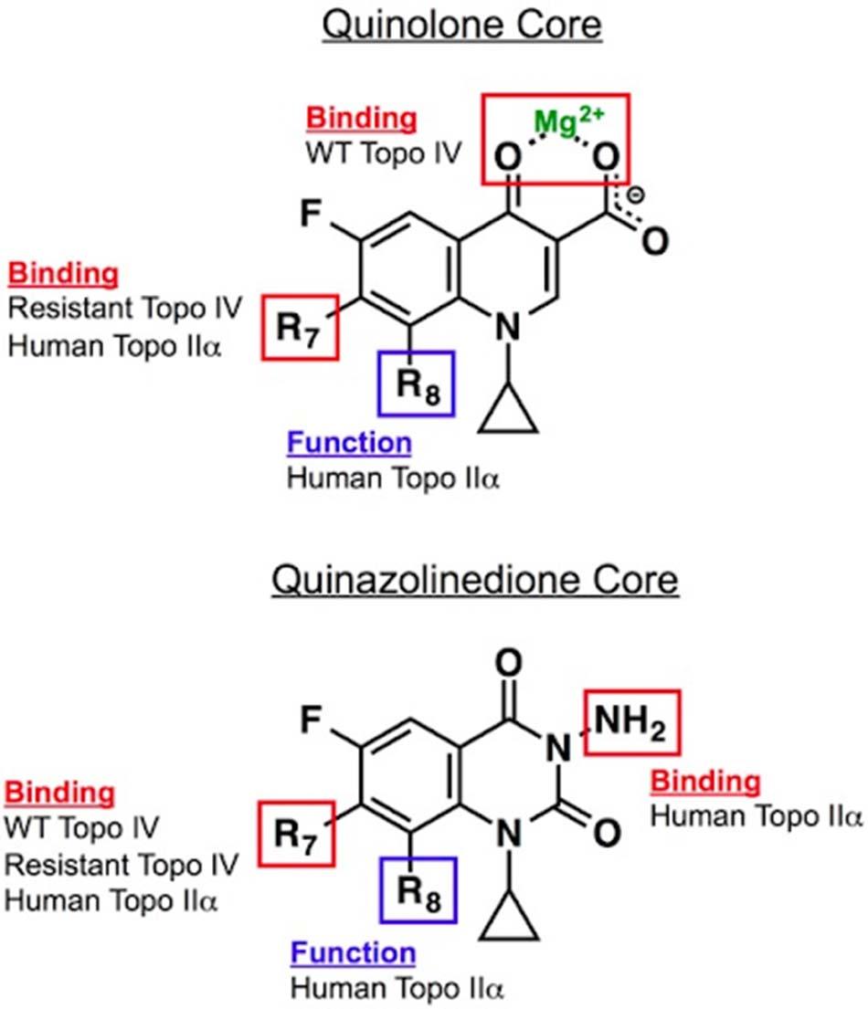 Cấu trúc khung của Quinolone (trên) và Quinazolinedione (dưới)