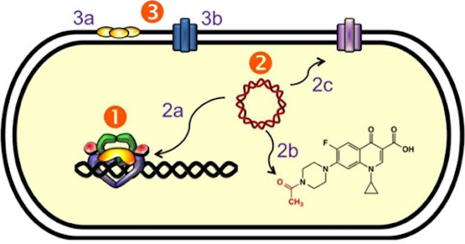 Các cơ chế đề kháng với kháng sinh nhóm Quinolone.