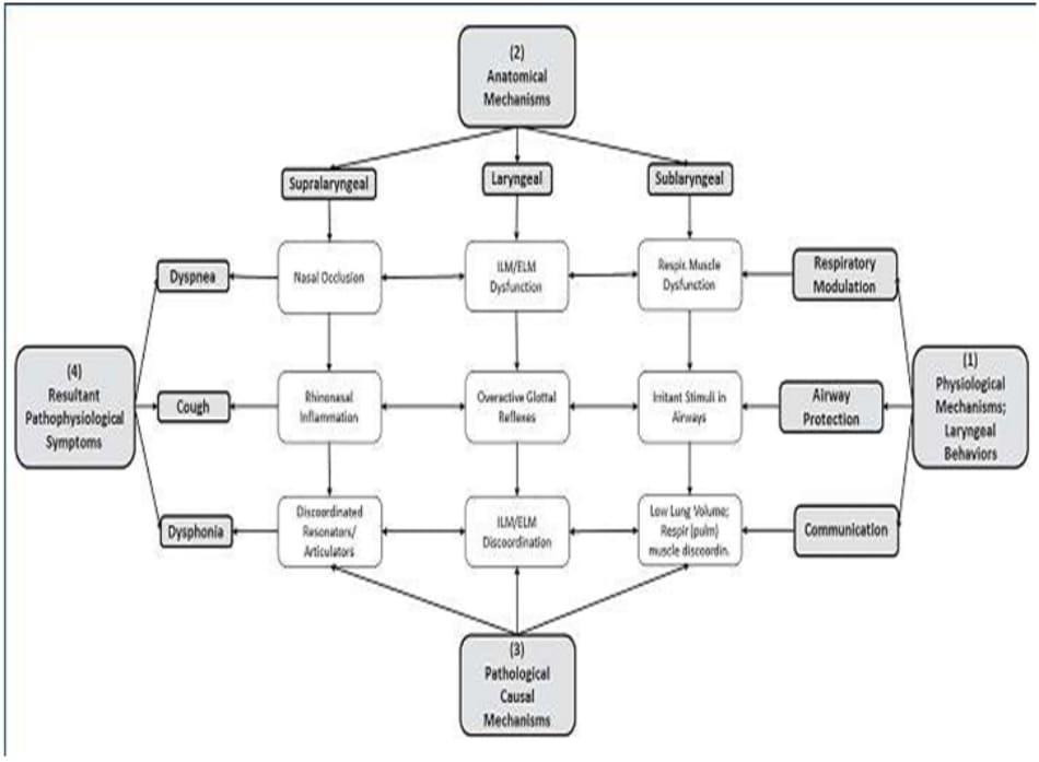 Hình 10-2: Cơ chế sinh lý và sinh lý bệnh liên quan đến hành vi thanh quản bao gồm ho, khó thở, và các bệnh học khác liên quan thanh quản (IML: cơ nội tại thanh quản, ELM: cơ ngoài thanh quản)