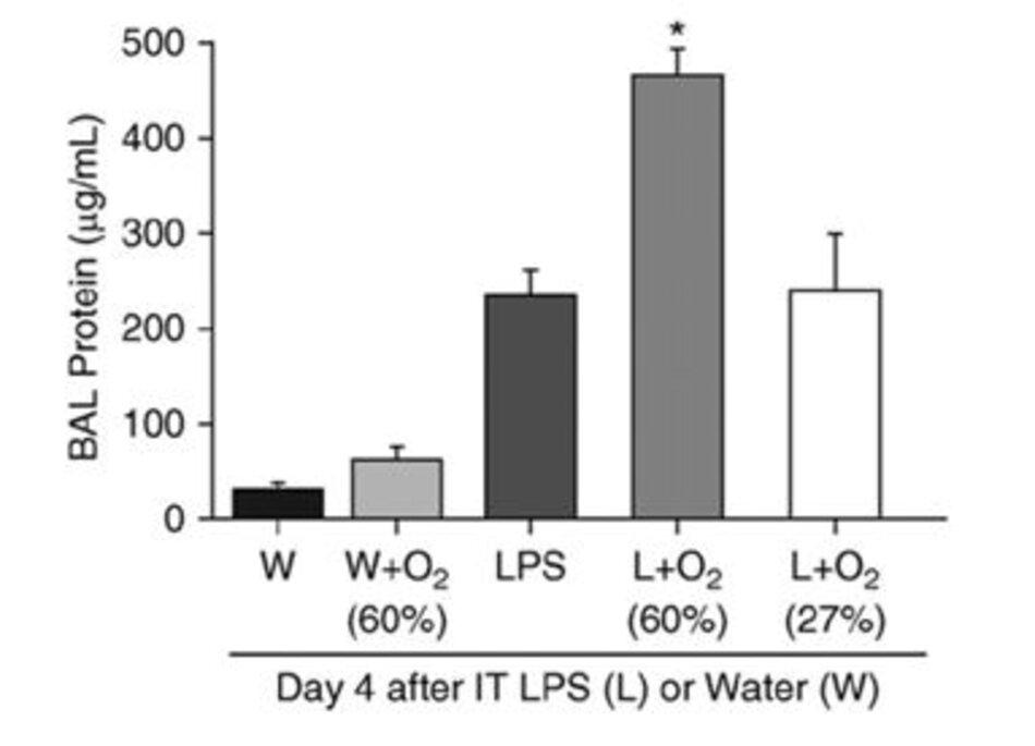 Hình 1.Proteinbronchoalveolar (BAL) được đo bằng dung dịch rửa trôi vào ngày thứ 4 sau khi bơm qua nội khí quản LPS hoặc nước (W), 12 giờ sau khi tiếp xúc với không khí trong phòng hoặc oxy (27 hoặc 60%) (n = 5-8 trong mỗi nhóm) , * P <0,05 so với tất cả các nhóm khác). Chuyển thể từ Tài liệu tham khảo 3.